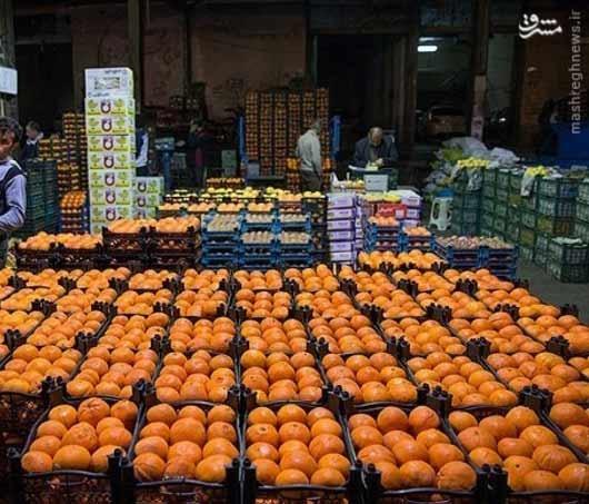 ایجاد غرفه تکمحصولی مرکبات در میادین میوه وترهبار تهران
