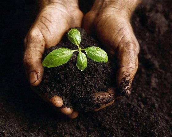۹۹ درصد از مایحتاج انسان از طریق خاک تولید میشود