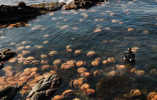 کشف ۶ گونه جدید حیوانی در اقیانوس هند