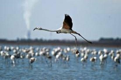 فرود ۱۵۰ هزار پرنده مهاجر در تالابهای چهارمحال و بختیاری