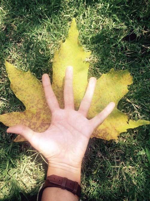 دستهاى پاییزى