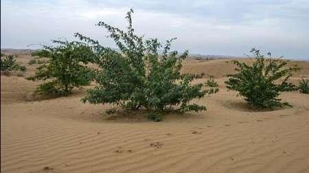 بیابانزدایی ۳۶۰۰ هکتار در خوزستان برای مقابله با گرد و خاک