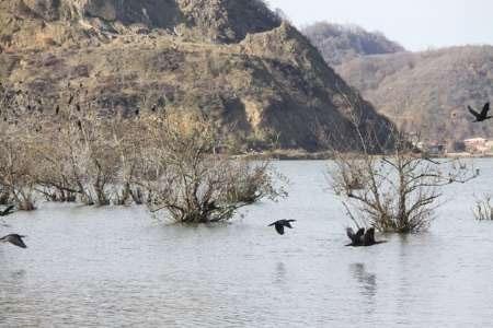 فرود پرندگان مهاجر در تالابهای آستارا