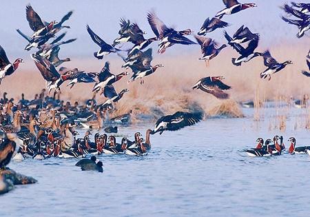 شکار-پرندگان-تا-اطلاع-ثانوی-در-گیلان-ممنوع-است