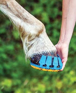 کفش ورزشی برای اسبها