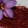 توقیف تولید دو برند زعفران | خامه دامداران هم مورددار شد