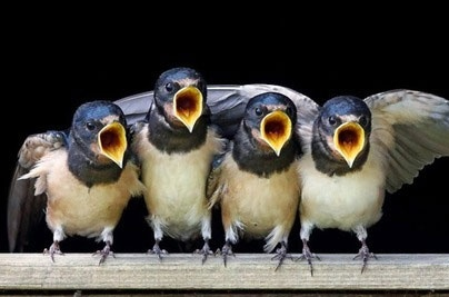 جیغ پرندگان در هیاهوی چهارشنبه سوری