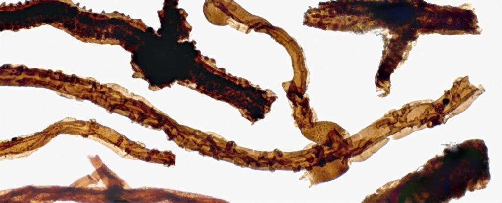کشف قدیمیترین گونه حیات در خشکی