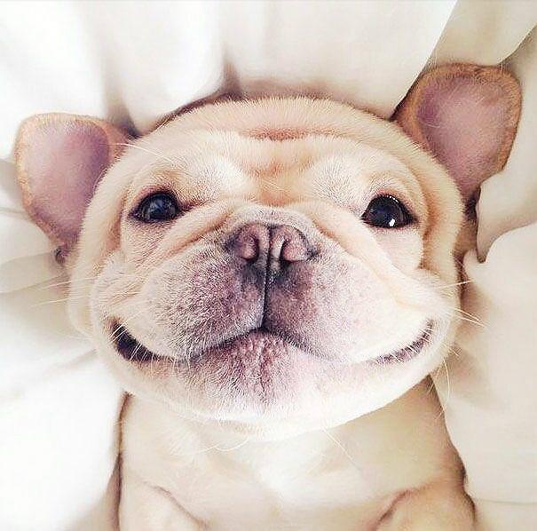 لبخند حیوانات ۱