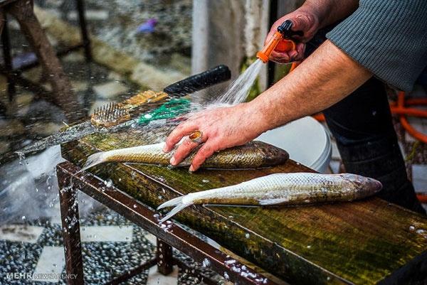 آلایندههای ماهی منجر به اختلال در سیستم دفاعی بدن میشود