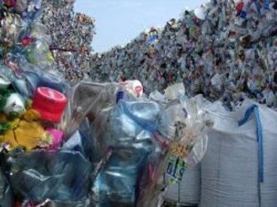 تلف شدن سالانه یک میلیون پرنده دریایی بر اثر زبالههای پلاستیکی