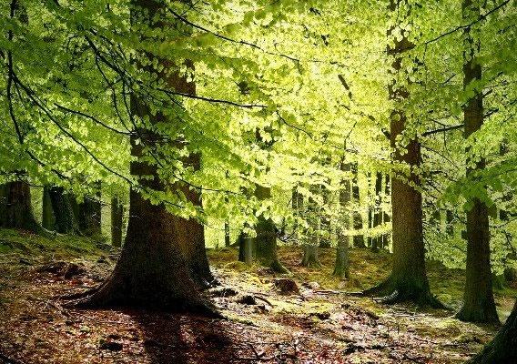 پیشبینی آینده جنگلها از فضا
