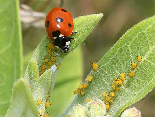 تولید آفتکش گیاهی بدون آسیب به حشرات مفید