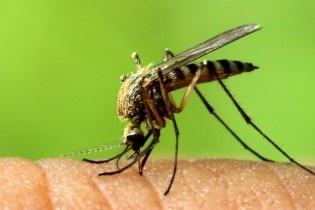 ویروس زیکا