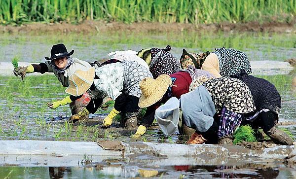 کشاورزی، نرخ رشد را نجات داد