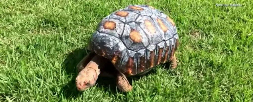چاپ اولین لاک ۳بعدی مصنوعی برای یک لاکپشت آسیبدیده