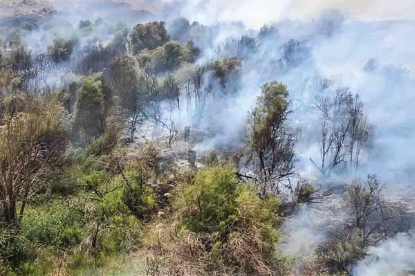 آتش سوزی جنگل