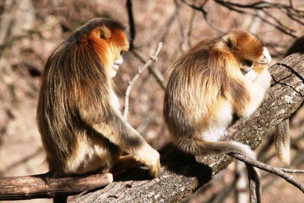 وجود حس دلسوزی در میمونها
