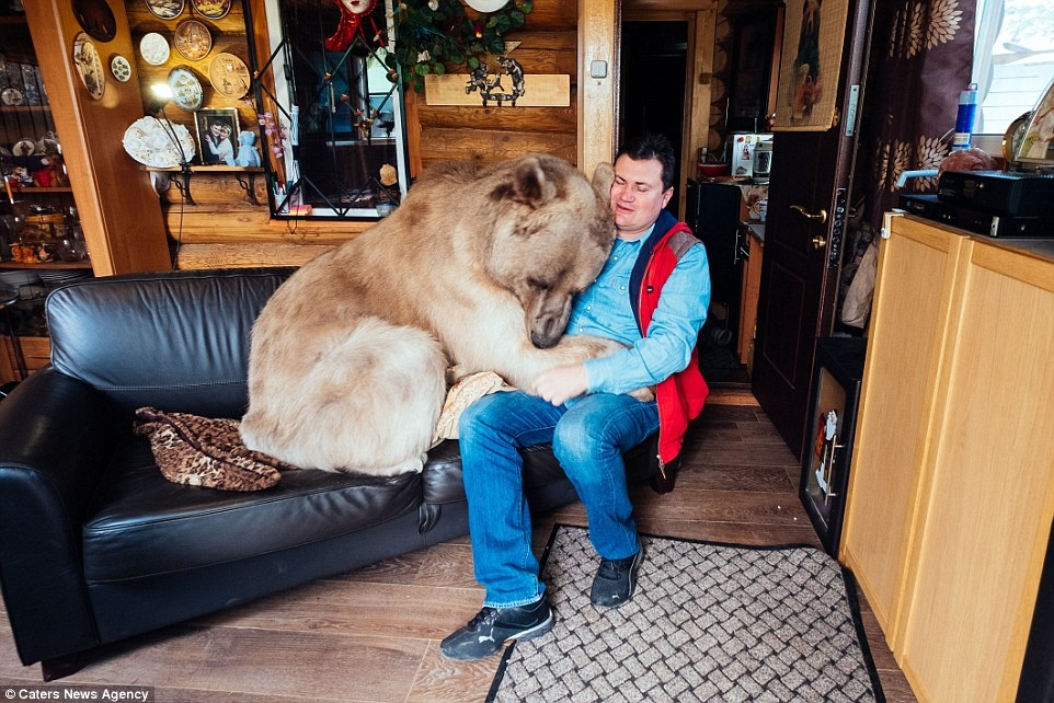 زندگی خانوادگی یک خرس