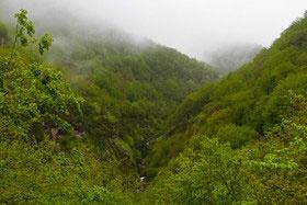 تغییر اقلیم با جنگلهای مازندران چه کرده است؟
