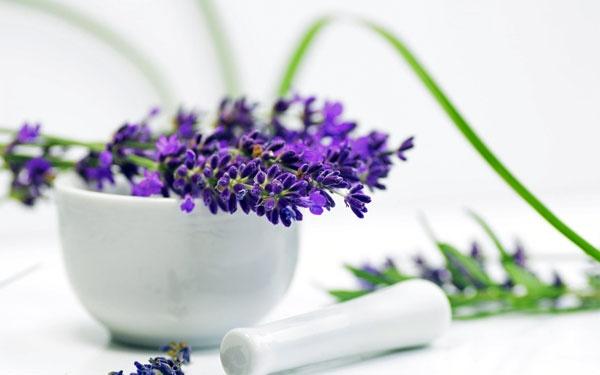 همه گیاهان دارویی بیضرر نیستند