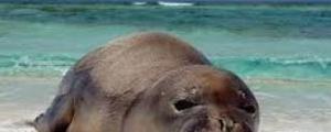 پنجسال زندان و ۵۰ هزار دلار جریمه به خاطر حمله به خوک دریایی