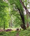 کاهش یا افزایش وسعت جنگلهای شمال؟