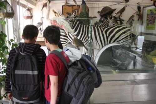 آشنایی با حیات وحش در دارآباد