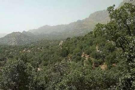 آلودگی بیش از سه هزار هکتار از جنگلهای هیرکانی به آفت برگخوار