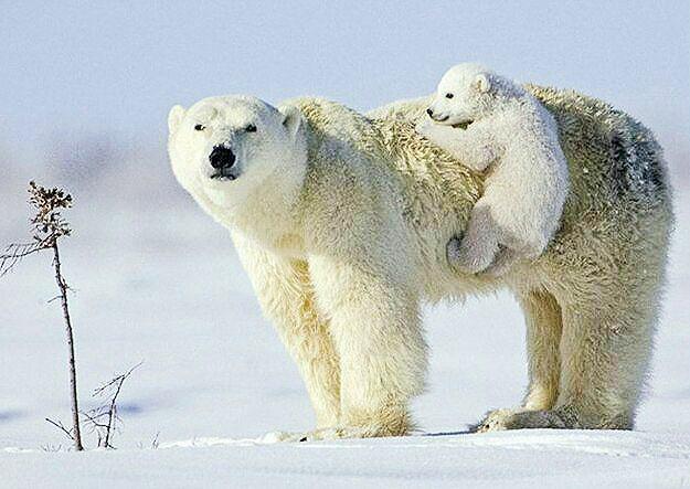 حیوانات و حس مادری