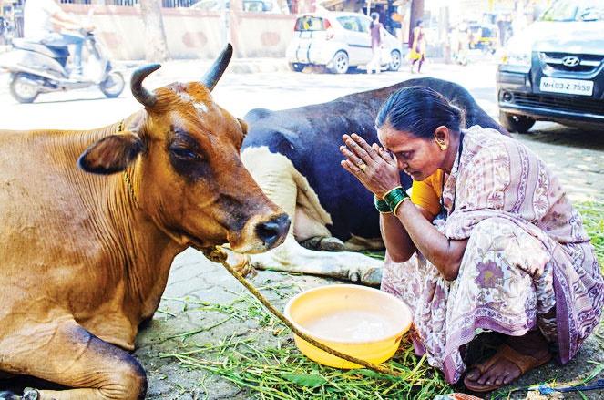 وزارتخانه گاو در هندوستان