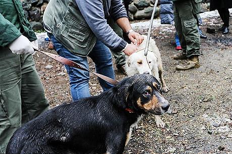 وضعیت سگهای ولگرد تهران | سالانه ۹ هزار سگ جمعآوری میشود