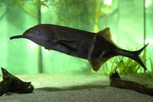این ماهی مثل انسان فکر میکند!