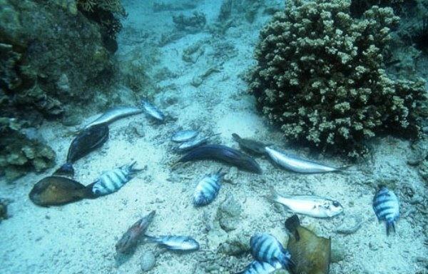 ماهیهای بریتانیا در آستانه نابودی