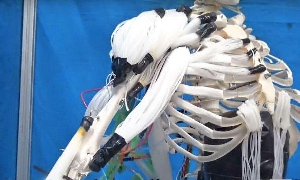 روباتی با ماهیچههایی شبیه به انسان