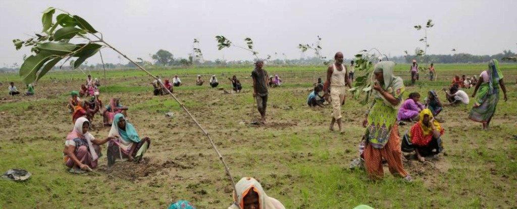 کاشت ۵۰ میلیون درخت در ۲۴ ساعت