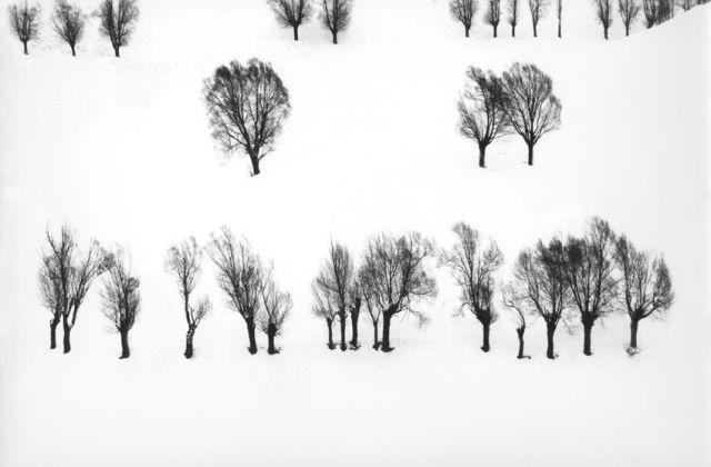 Trees۲