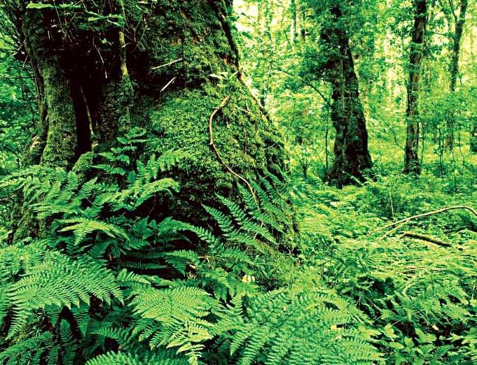 جنگل هیرکانی در هر شرایطی جنگل میماند