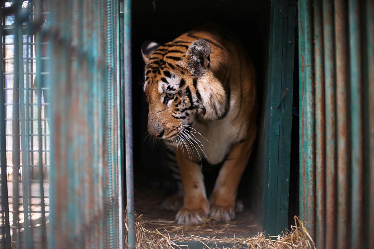 بدترین باغ وحش جهان