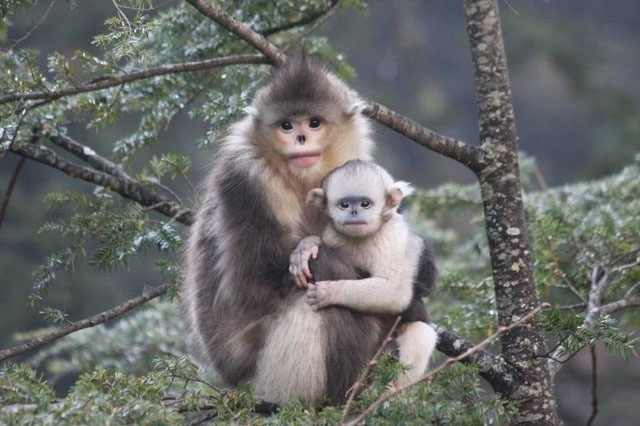 غمگینترین میمون جهان شناسایی شد