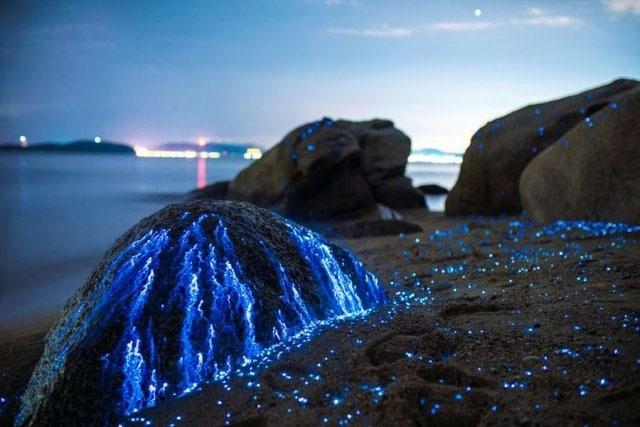 گریه سنگها در سواحل ژاپن