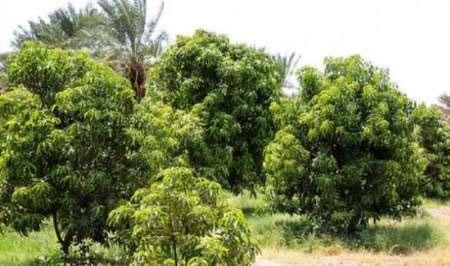تغییر اقلیم در ایران آفتی برای تولیدات باغی است