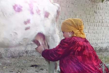 تاجیکستان زنان گاودوش به روسیه می فرستد