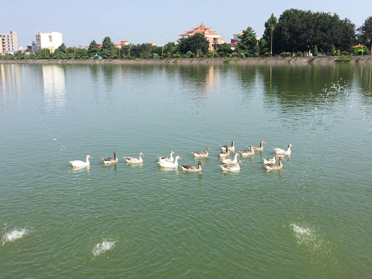 عکس روز: آبهای آرامش، مرغابیها، نور و آفتاب