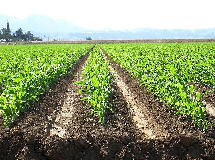 کشاورزی ارگانیک خواسته مردم و سلامت جامعه است