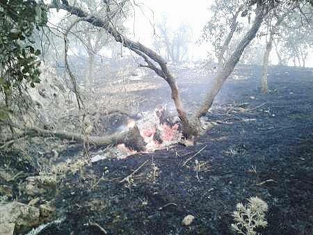 آتش به جان جنگلهای گیلانغرب؛ ۸۰ هکتار سوخت