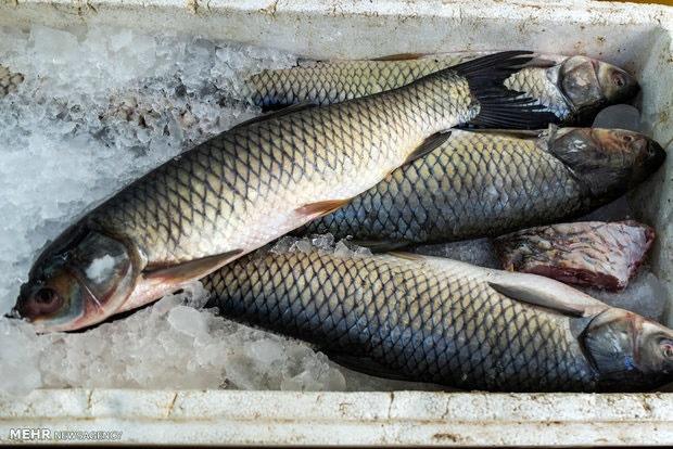 روغن ماهی به حفظ عملکرد مغز کمک میکند