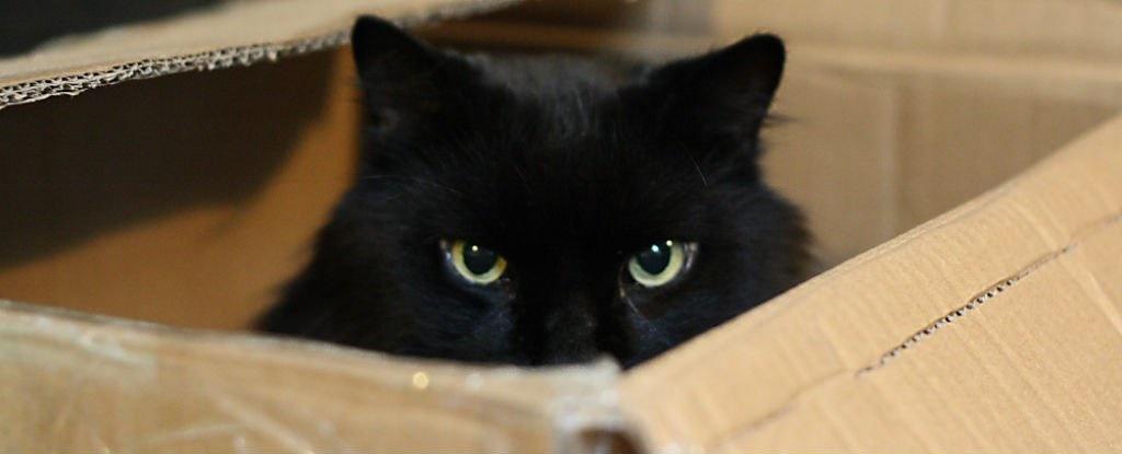 مفاهیم: گربه شرودینگر چیست؟