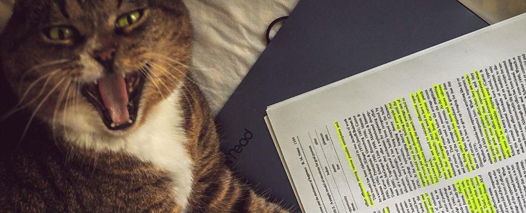 مقالهای فیزیکی که یک گربه آن را نوشت