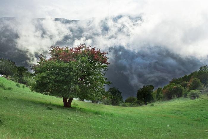 جنگل ابر، منطقه حفاظتشده اعلام شد